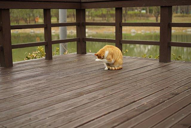 5 Reasons why Decking is a Positive Investment